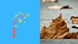 Comment affronter la maladie et la mort : des feuilles mortes